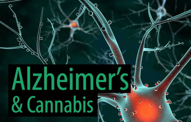 Η Νόσος του Alzheimer