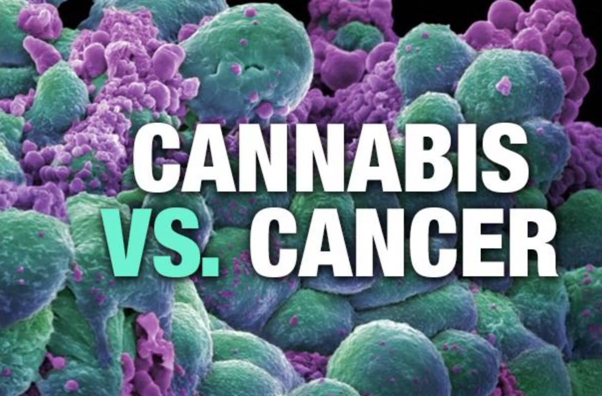 Η Κάνναβη και ο Καρκίνος