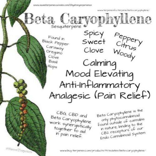 Β-Καρυοφυλλένιο - B-Caryophyllene