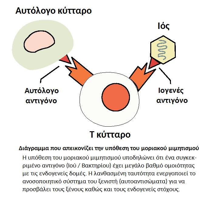 Ανοσοποιητικό σύστημα, αυτοάνοσα νοσήματα, μοριακός μιμητισμός και κάνναβη