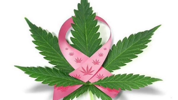 Κάνναβη και Καρκίνος του Μαστού
