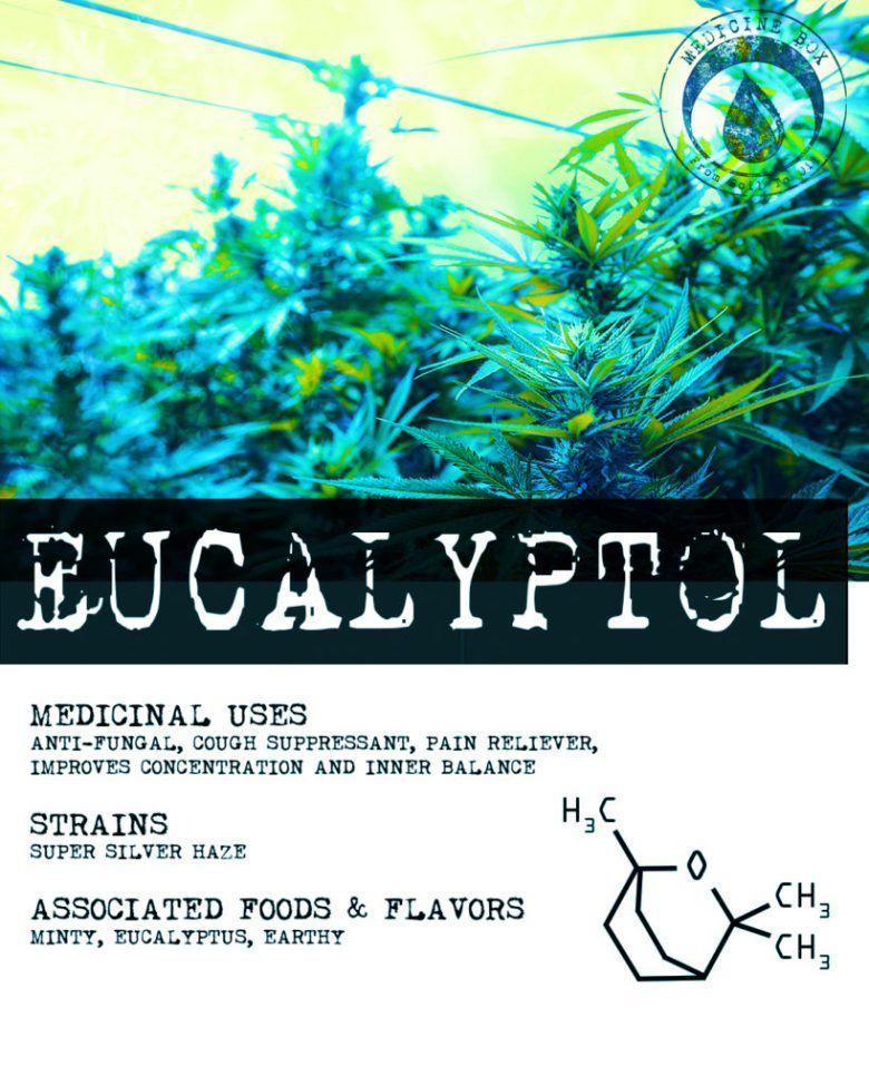 Ευκαλυπτόλη (Eucalyptol) 10ml