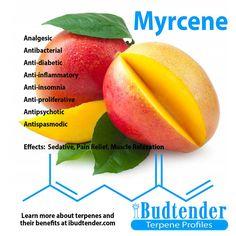 Μυρσένιο (Myrcene) 10ml - Terpenes UK