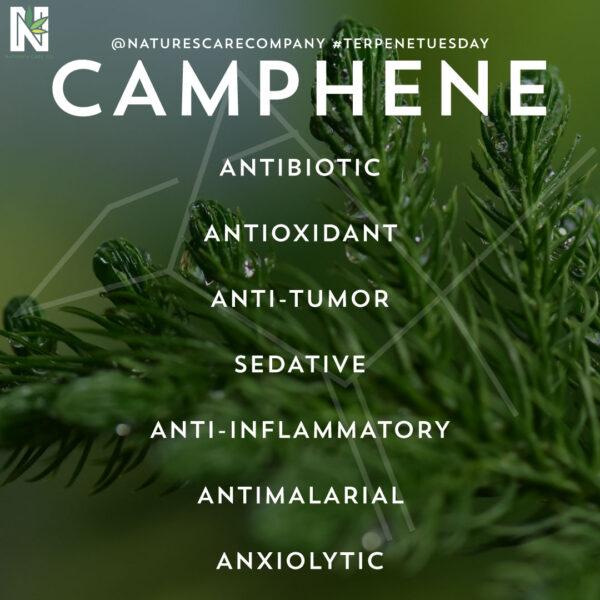 Καμφίνη - Camphene