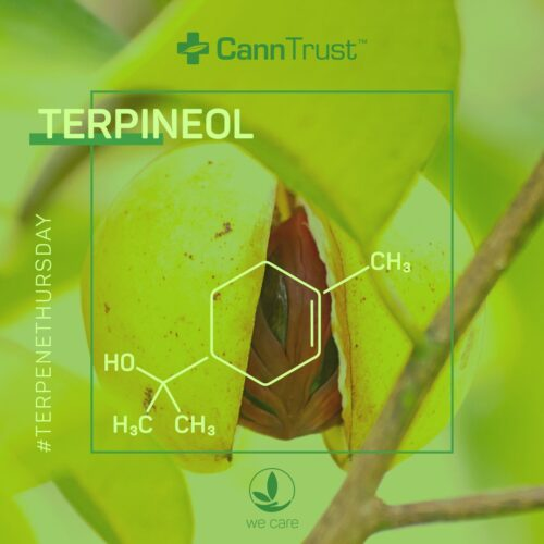 Τερπινεόλη (Terpineol) - Terpenes UK