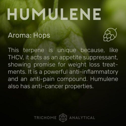 Χουμουλένιο - Humulene