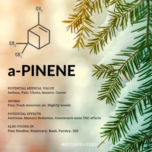 Α-Πινένιο - A-Pinene