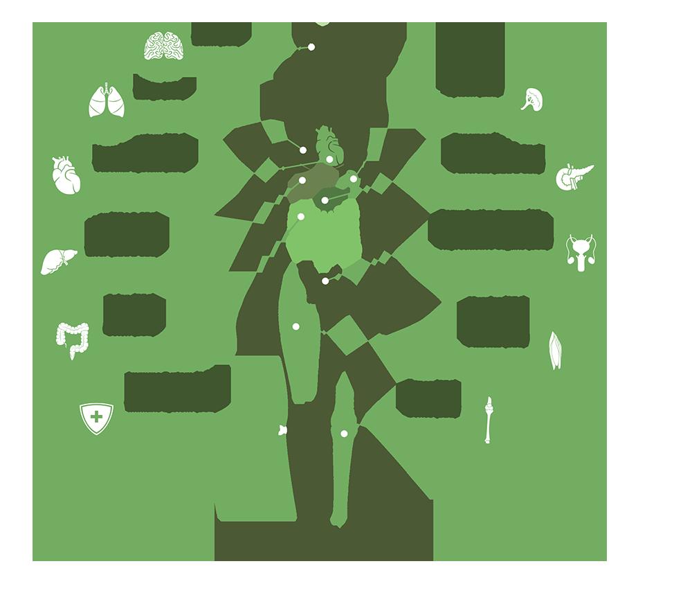 Βήτα Καρυοφυλλένιο: Τα Πιθανά Οφέλη