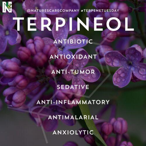 Τερπινεόλη - Terpineol