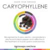 Βήτα Καρυοφυλλένιο (Beta Caryophyllene) 10ml - Terpenes UK