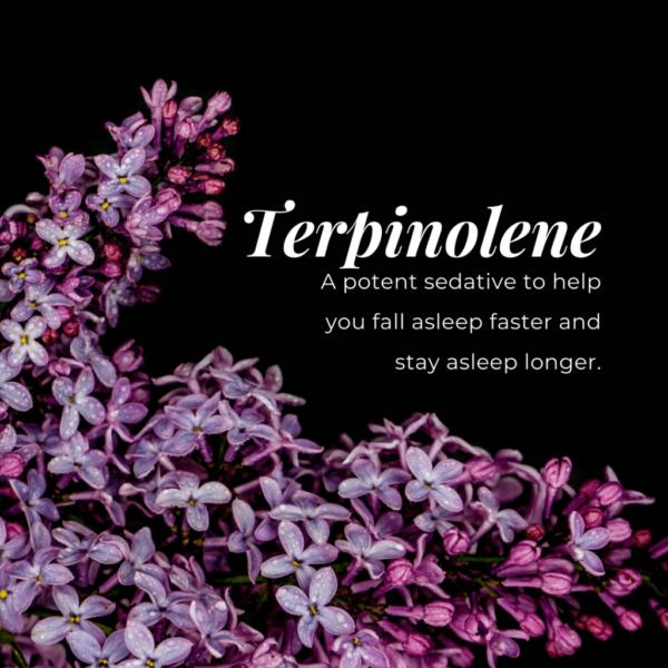 Τερπινολένη - Terpinolene