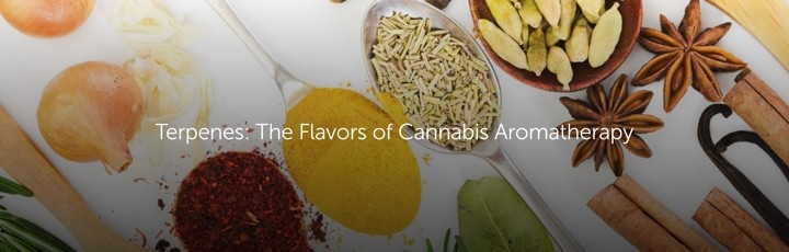 tgHdm00vTnOouc1POXbm terpenes the flavors of cannabis aromatherapy 1