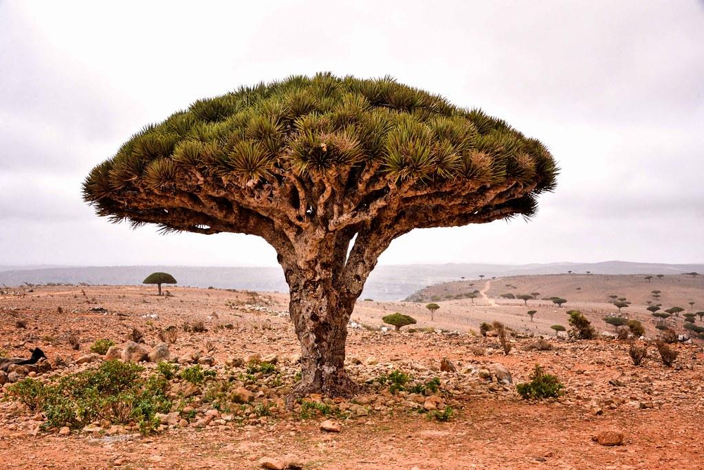 Το Ιερό Δέντρο