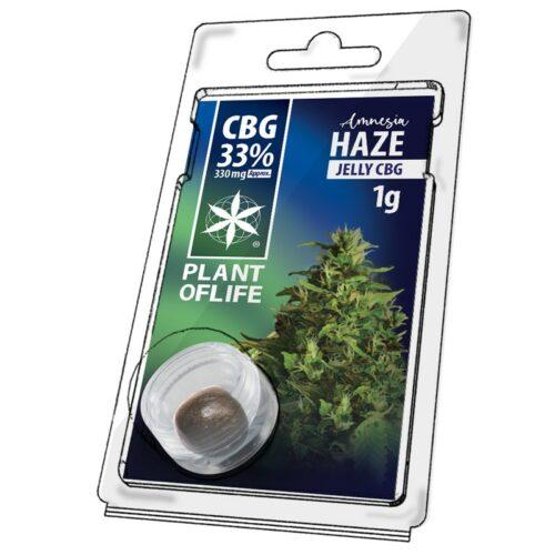 Amnesia Haze Jelly CBG 33% – Plant Of Life